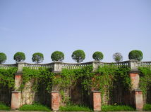 Amicable system. The trees are on the wall Stock Photography