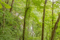 Amicalola Falls. Stock Images