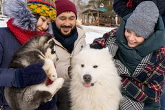 Amici che giocano con i cani Fotografia Stock