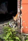 Amici del gattino Immagini Stock