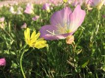 Amici del Wildflower Immagini Stock