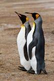 Amici di re Penguin Immagine Stock