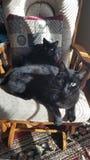 Amici felini per vita fotografia stock libera da diritti
