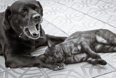 Amicizia del cane e del gatto Immagine Stock Libera da Diritti