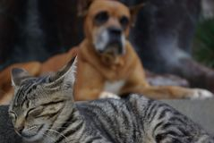 Amicizia del cane e del gatto per sempre Fotografia Stock Libera da Diritti
