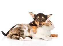 Amicizia del gatto e del cucciolo di cane Su fondo bianco Immagine Stock