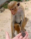 Amicizia dell'essere umano della scimmia Fotografie Stock