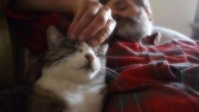 Amicizia dell'uomo e del gatto stock footage