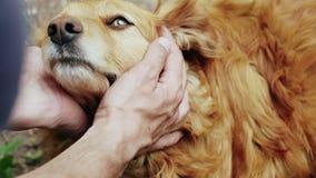 Amicizia fra gli esseri umani e gli animali domestici video d archivio