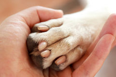 Amicizia fra l'essere umano ed il cane Fotografia Stock