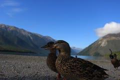 Amicizia sul lago Fotografia Stock Libera da Diritti