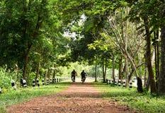 Amico che cicla nella foresta Fotografie Stock