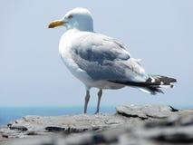 Amico della spiaggia Fotografia Stock Libera da Diritti