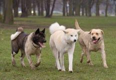 Amico felice dell'albero - cani Fotografia Stock Libera da Diritti