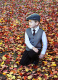 Amid a Carpet of Red Leaves Stock Photography