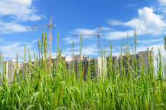 Amid growing wheat a newly built modern home Royalty Free Stock Photography