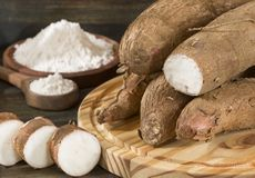Amidon de manioc - Manihot esculenta image stock