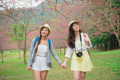 Amigas felizes novas que olham sakura bonito Imagem de Stock