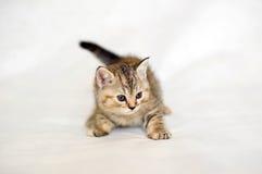 Amigo de la familia, pequeño gatito Imágenes de archivo libres de regalías