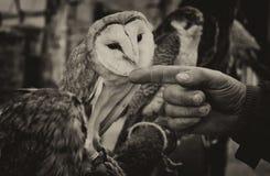 Amigo de la mano Imagen de archivo libre de regalías