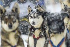 Amigo del invierno listo para las nuevas aventuras imagen de archivo libre de regalías