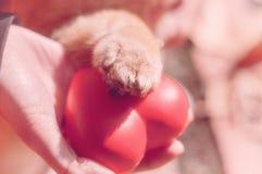 Amigo fiel, amistoso Concepto de la amistad con el perro Estafa del perro Imagen de archivo