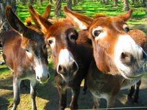3 amigo's Royalty-vrije Stock Foto's