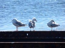 amigos τρία Στοκ εικόνες με δικαίωμα ελεύθερης χρήσης