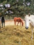 3 Amigos Стоковая Фотография