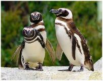 3 Amigos Стоковые Фото