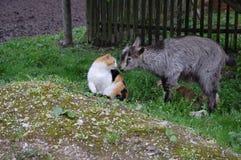 Amigos animais Imagens de Stock Royalty Free