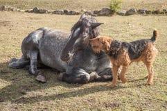 Amigos animais Foto de Stock