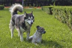 Amigos caninos Imagens de Stock
