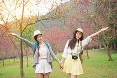 Amigos de las mujeres felices en Japón en el santuario de Sakura imagen de archivo