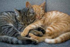 Amigos de los gatos Imagen de archivo libre de regalías