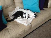 Amigos de sono do gato Fotografia de Stock
