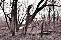 Amigos del árbol fotografía de archivo