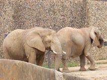 Amigos del elefante en el parque zoológico Foto de archivo libre de regalías