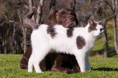 Amigos del gato y del perro Fotografía de archivo libre de regalías