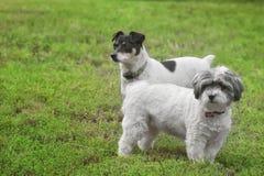 Amigos del perrito Imagenes de archivo