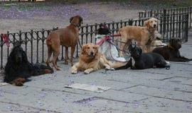 Amigos del perrito Fotos de archivo libres de regalías