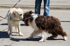 Amigos del perro fotografía de archivo