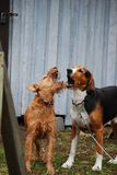 Amigos del perro Fotografía de archivo libre de regalías