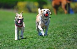 Amigos del perro que recorren a través del parque Imágenes de archivo libres de regalías