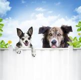 Amigos do cão Imagens de Stock Royalty Free