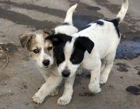 Amigos do filhote de cachorro Imagem de Stock