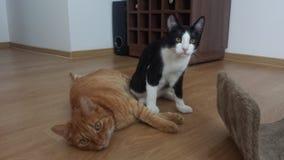 Amigos dos felines fotografia de stock