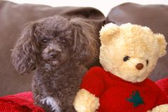 Amigos e feriados Foto de Stock Royalty Free