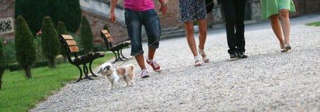Amigos e um filhote de cachorro Imagem de Stock Royalty Free