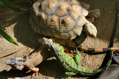 Amigos en el parque zoológico Fotografía de archivo libre de regalías